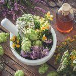 Les bienfaits insoupçonnés des plantes et des compléments alimentaires
