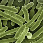 Prébiotiques et probiotiques : quelle est la différence ?