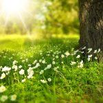 Des funérailles écologiques : c'est possible ?